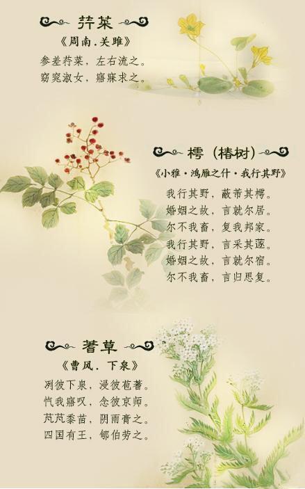 以诗经为例欣赏激发古人浪漫主义的植物(一)