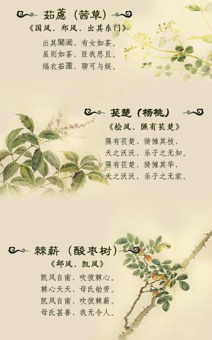以诗经为例欣赏激发古人浪漫主义的植物(二)