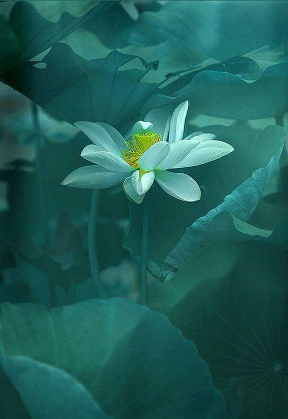 看取莲花净,应知不染心 中式古典园林莲花之美