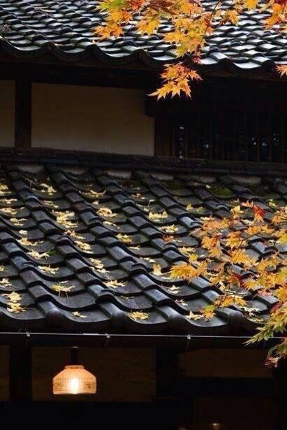 中国古建瓦当,屋檐上的艺术