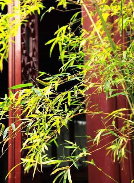 中式园林古窗极致韵味--窗户虚邻,宛然镜游