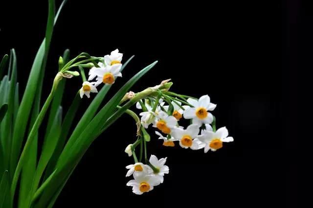 5种植物让中式装修家居提高逼格增加运势